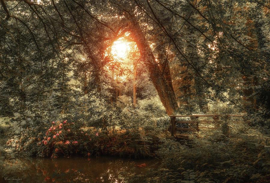 Hidden Beauty by Wim Lanclus