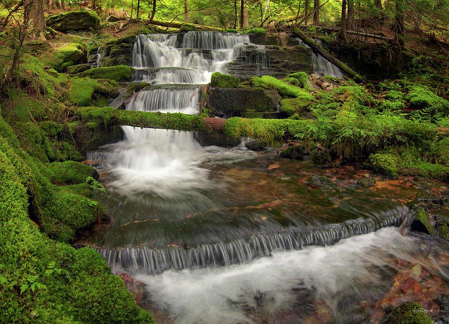 Nature Photograph - Hidden Forest Beauty by Leland D Howard