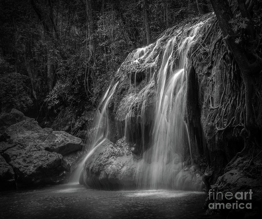 Hidden In The Jungle Of Guatemala BW by Jola Martysz
