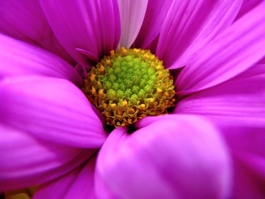 Flower Photograph - Hidden Inside by Rhonda Barrett