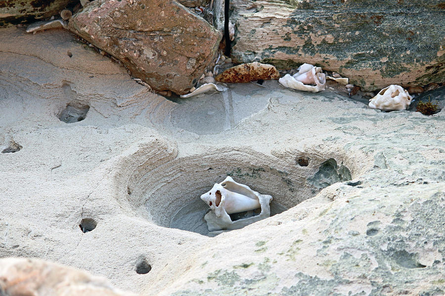 Hidden shells on Bimini Beach by Samantha Delory