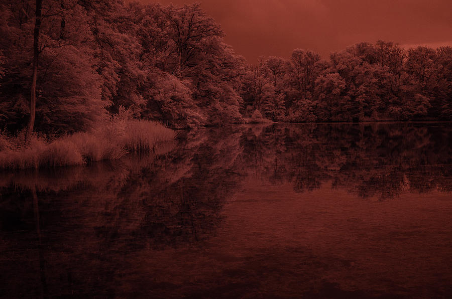 Infrared Photograph - Hidden Time by Miguel Winterpacht