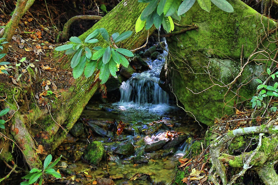 Waterfall Photograph - Hidden Treasures by HH Photography of Florida