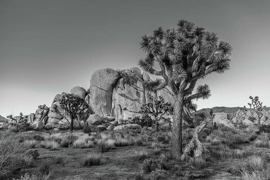 California Photograph - Hidden Valley Rock by Peter Tellone