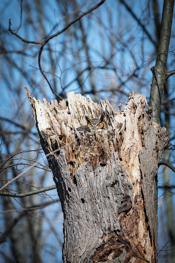 Owl Photograph - Hide And Seek by Becca Braskie