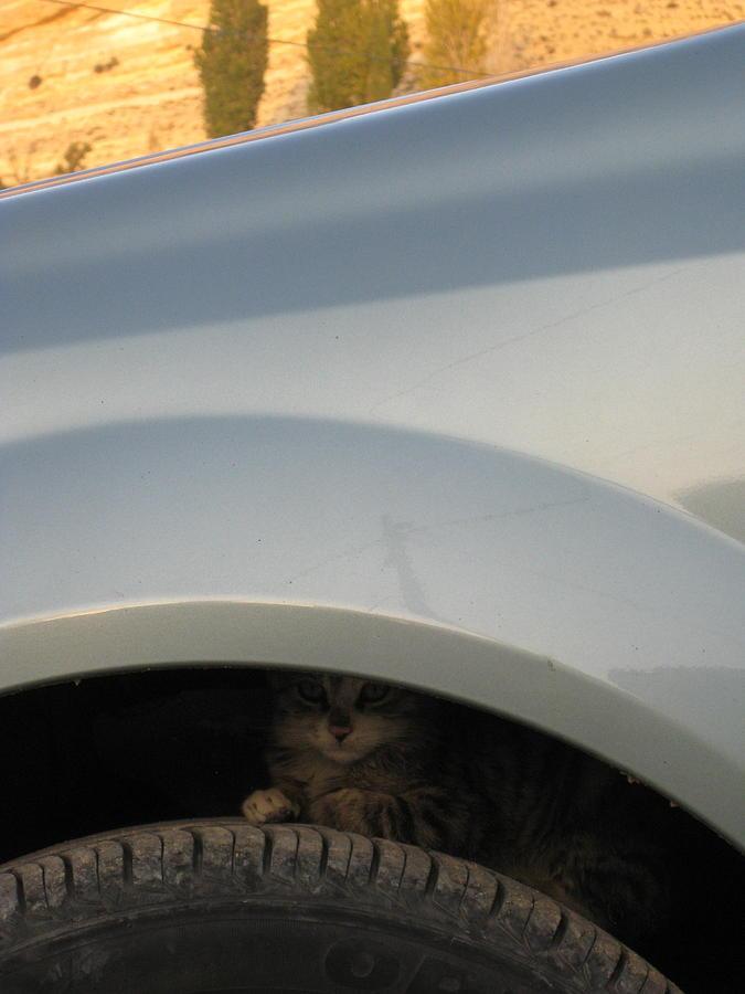 Car Photograph - Hide And Seek by Nina  Kamp