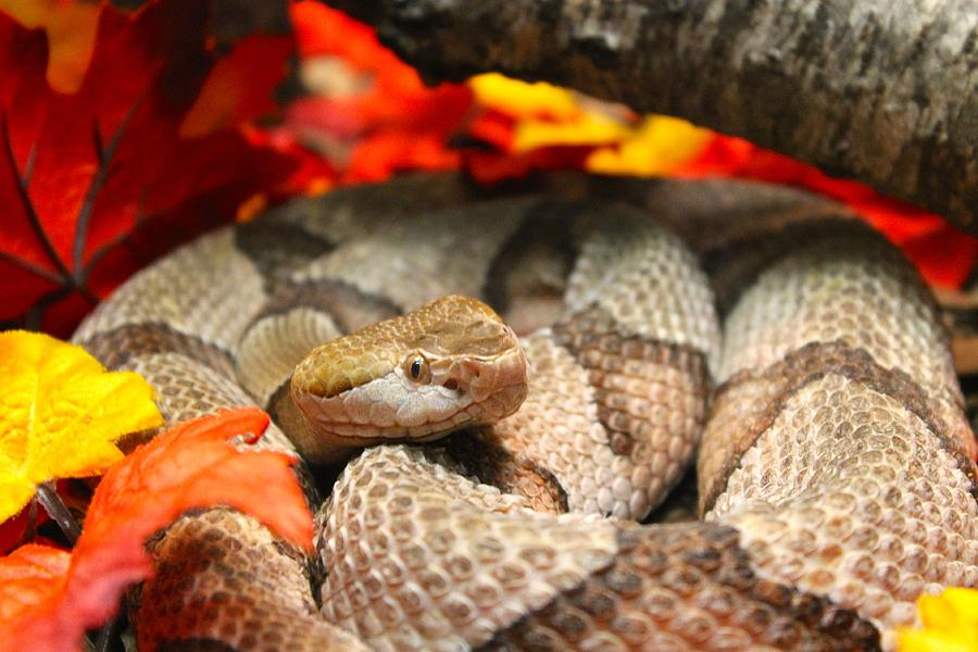 Snake Photograph - Hiding by Jennifer Raines