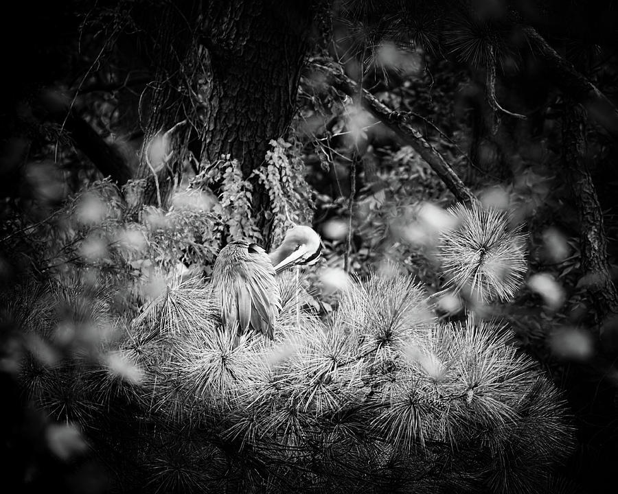 Great Blue Heron Photograph - Hiding Place by Michael McStamp