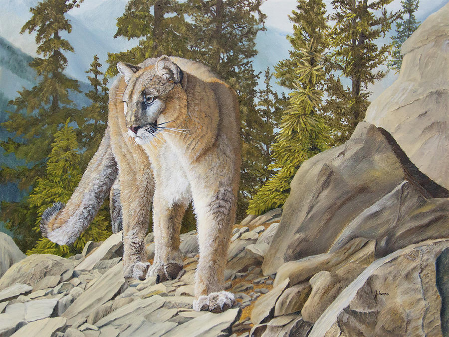 High Country - Cougar by Johanna Lerwick