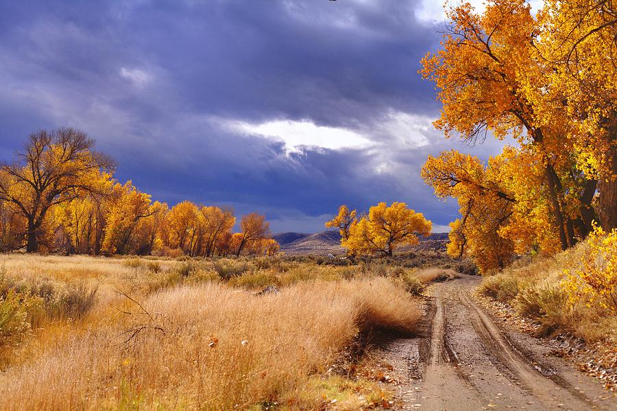 Yellow Photograph - High Desert Autumn II by SB Sullivan