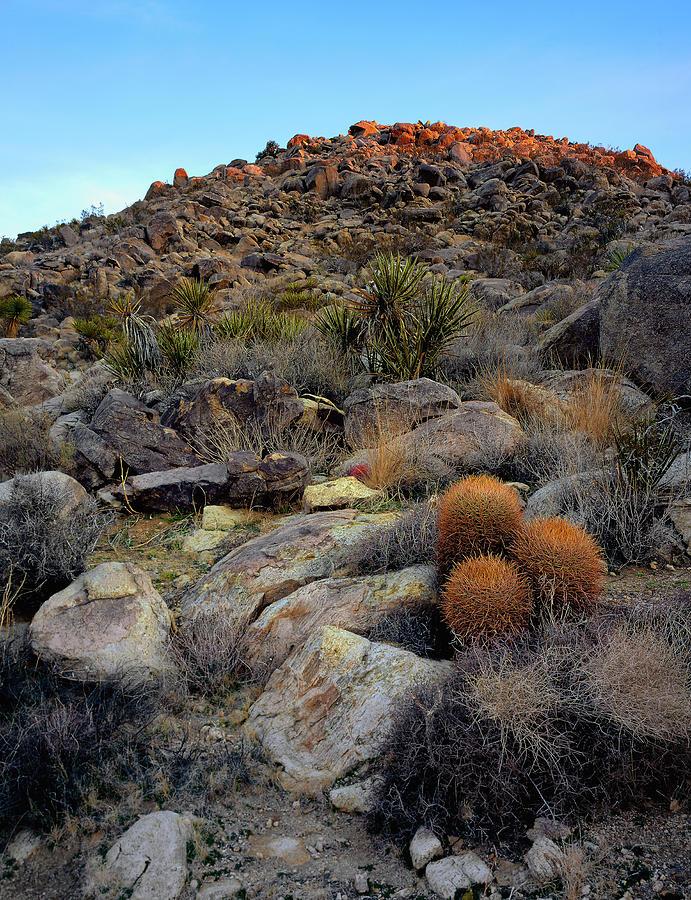High Desert Garden Photograph By Paul Breitkreuz