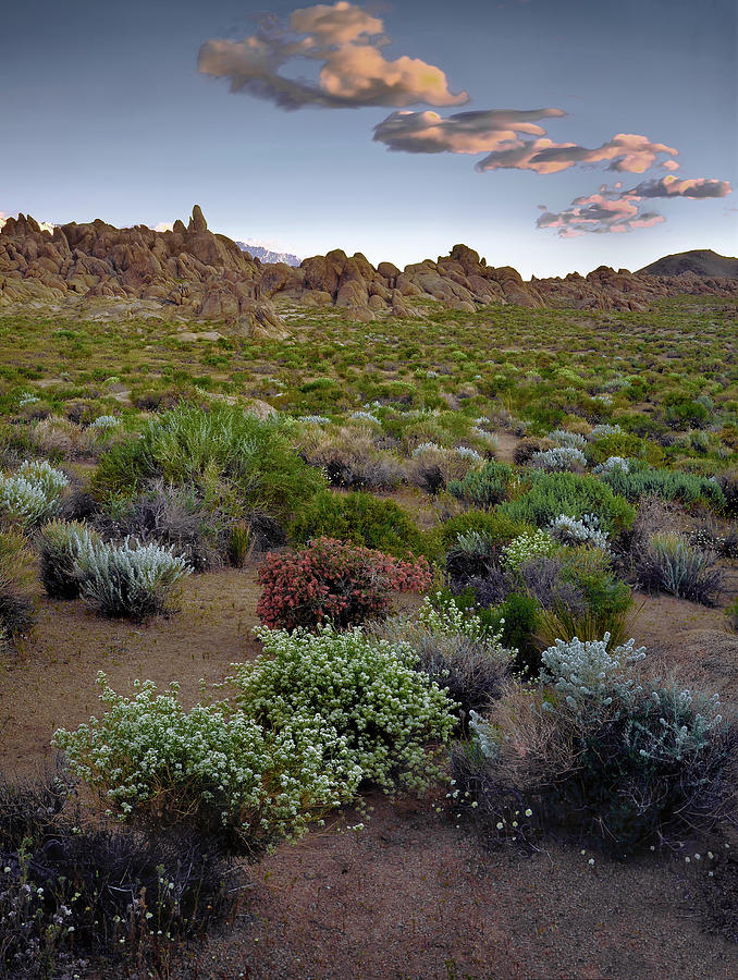 High Desert Hues by Paul Breitkreuz