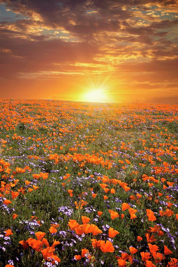 High Desert Wildflower Sunset Photograph By Lynn Bauer