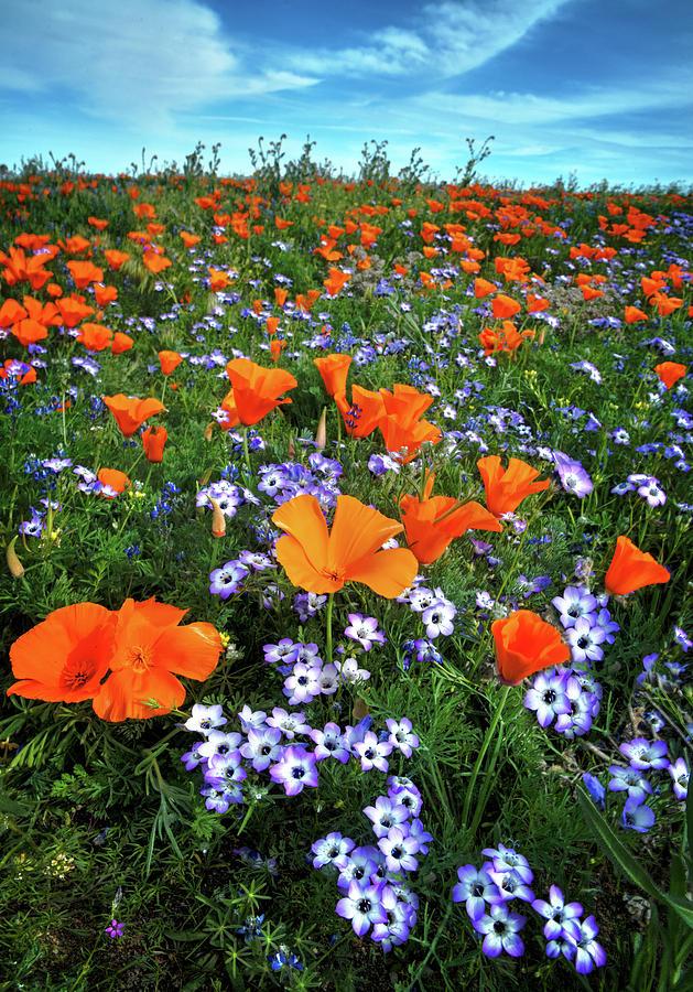 High Desert Wildflowers Photograph By Lynn Bauer