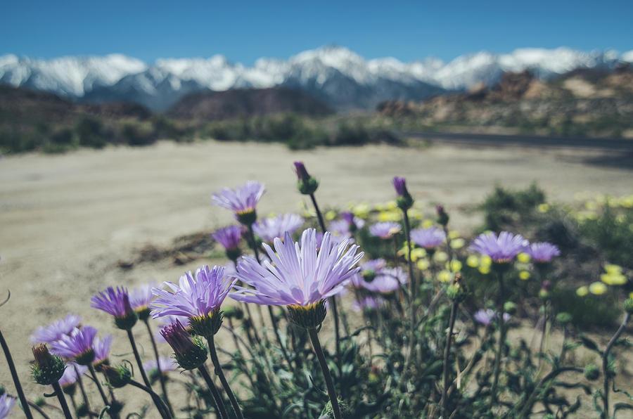 California Photograph - High Desert Wildflowers by Margaret Pitcher