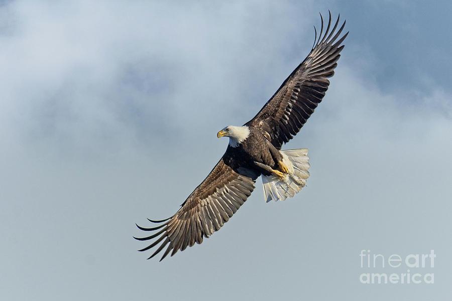 High Flight by Craig Leaper