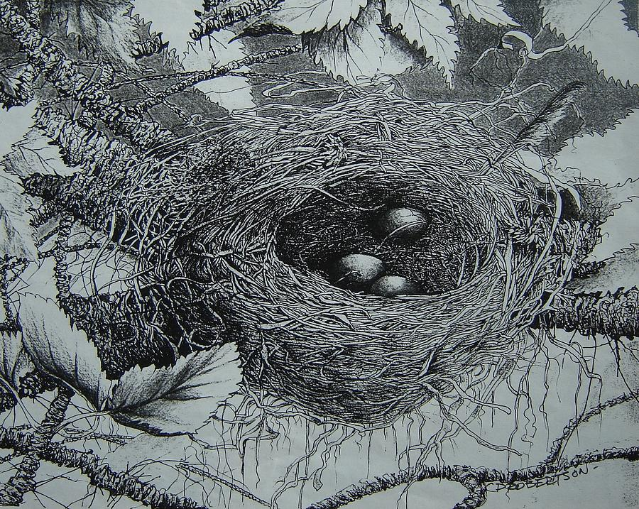 High In The Trees Drawing by Catherine Robertson