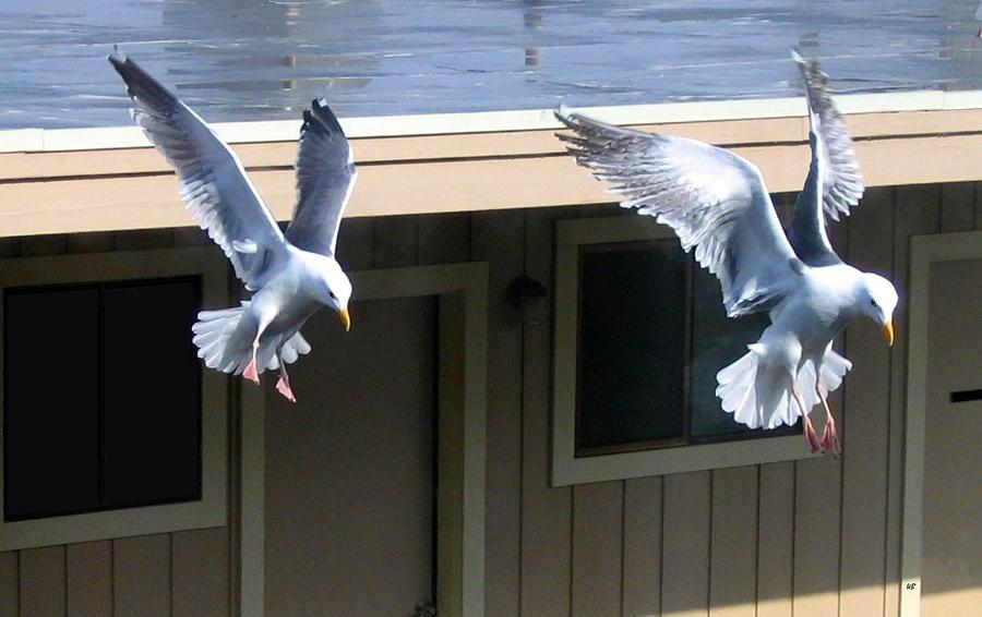 Seagulls Photograph - High Spirits by Will Borden