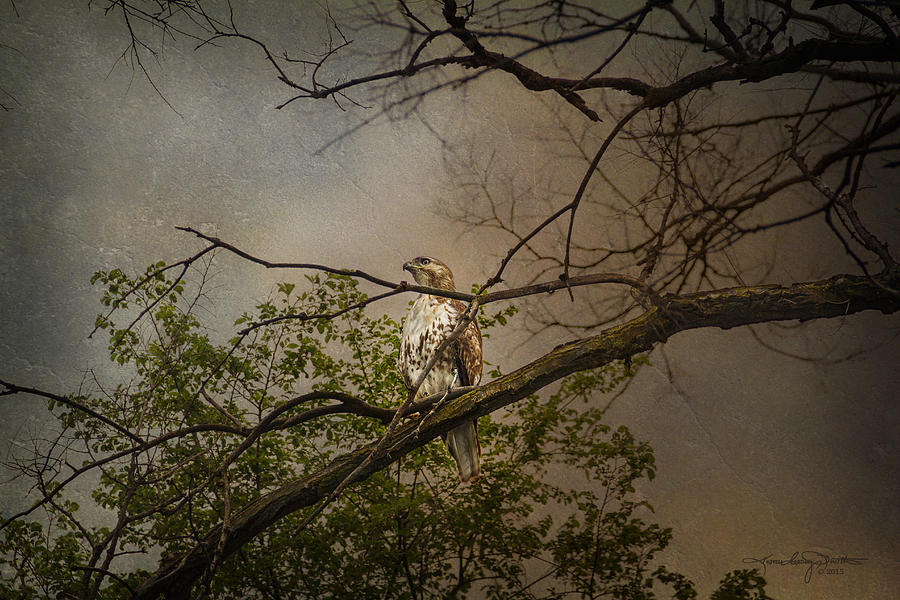 Hawk Photograph - Higher Perspective by Karen Casey-Smith