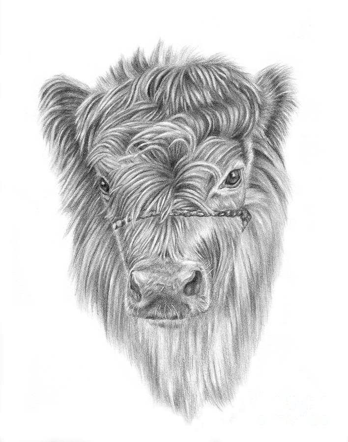 Highland Calf by Pencil Paws