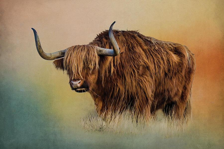 Highland Cattle Texture by Roy Pedersen