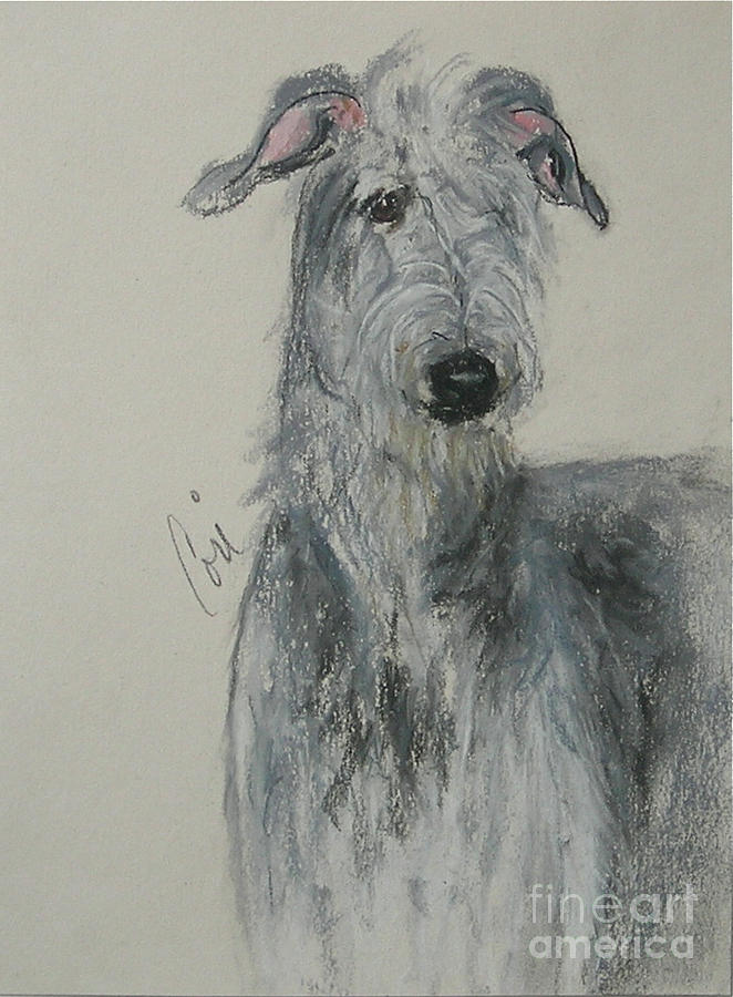 Scottish Deerhound Drawing - Highland Hunter by Cori Solomon
