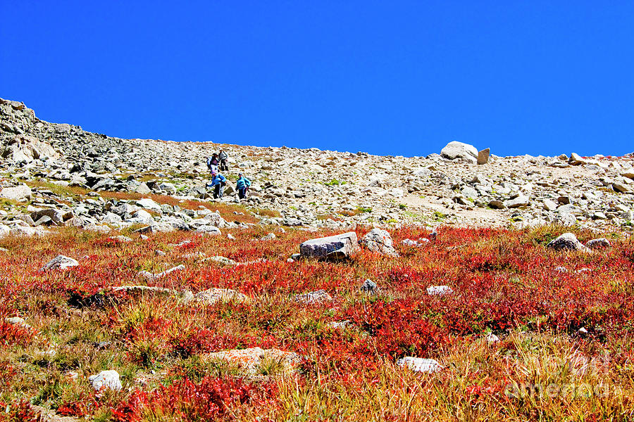 Hikers And Autumn Tundra On Mount Yale Colorado Photograph