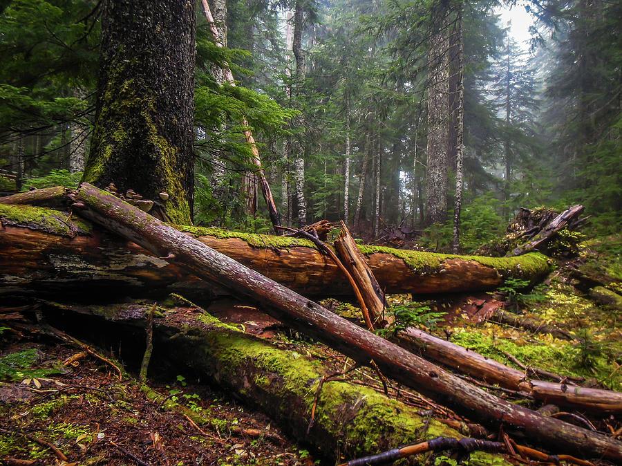 Hiking  by Tony Porter Photography