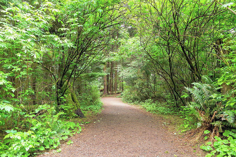 Hiking Photograph - Hiking Trail Along Lewis And Clark River by David Gn
