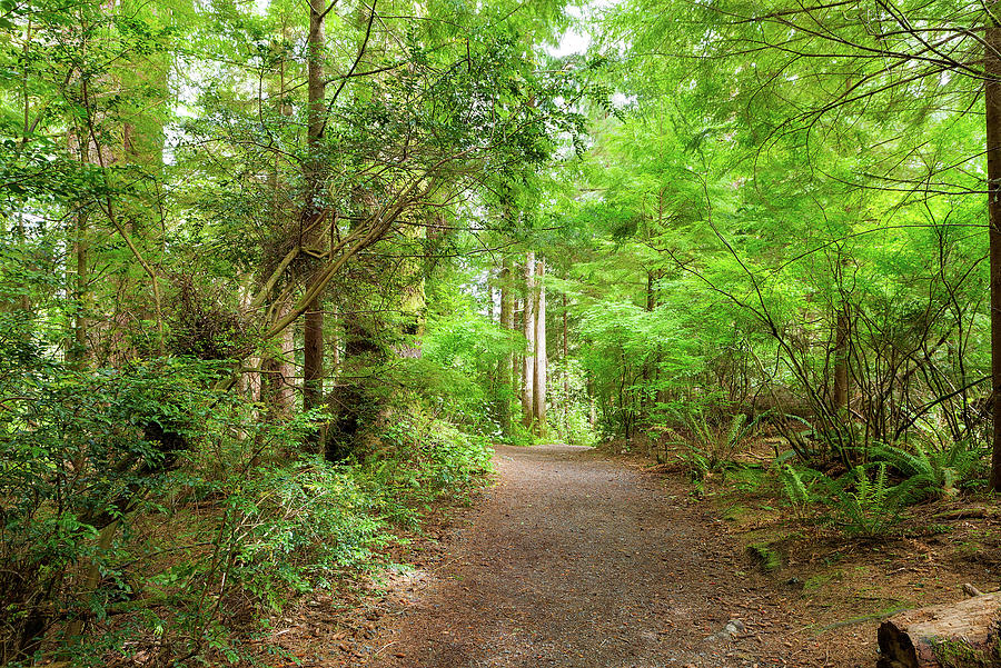 Hiking Photograph - Hiking Trail Through Forest Along Lewis And Clark River by David Gn