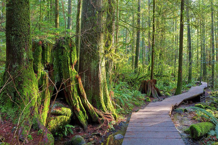 Lynn Photograph - Hiking Trail Through Forest in Lynn Canyon Park by David Gn