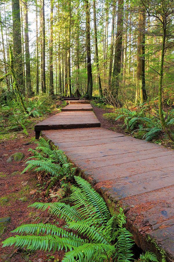 Lynn Photograph - Hiking Trail Wood Walkway In Lynn Canyon Park by David Gn