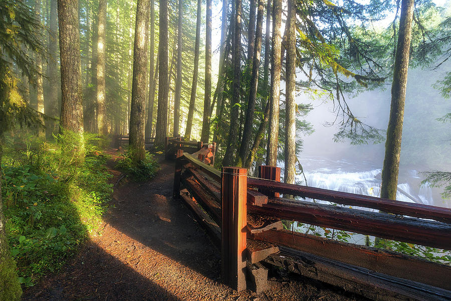 River Photograph - Hiking Trails at Lower Lewis River Trail by David Gn