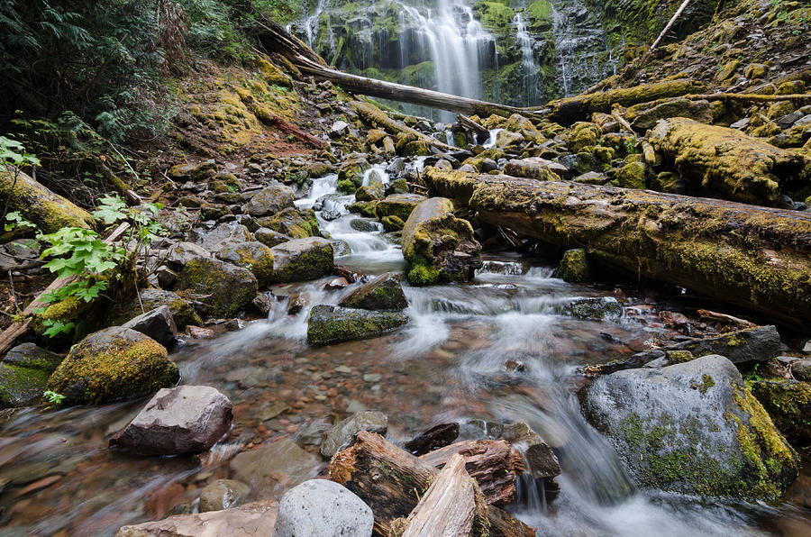 Waterfall Photograph - Hiking Zen Forests by Margaret Pitcher