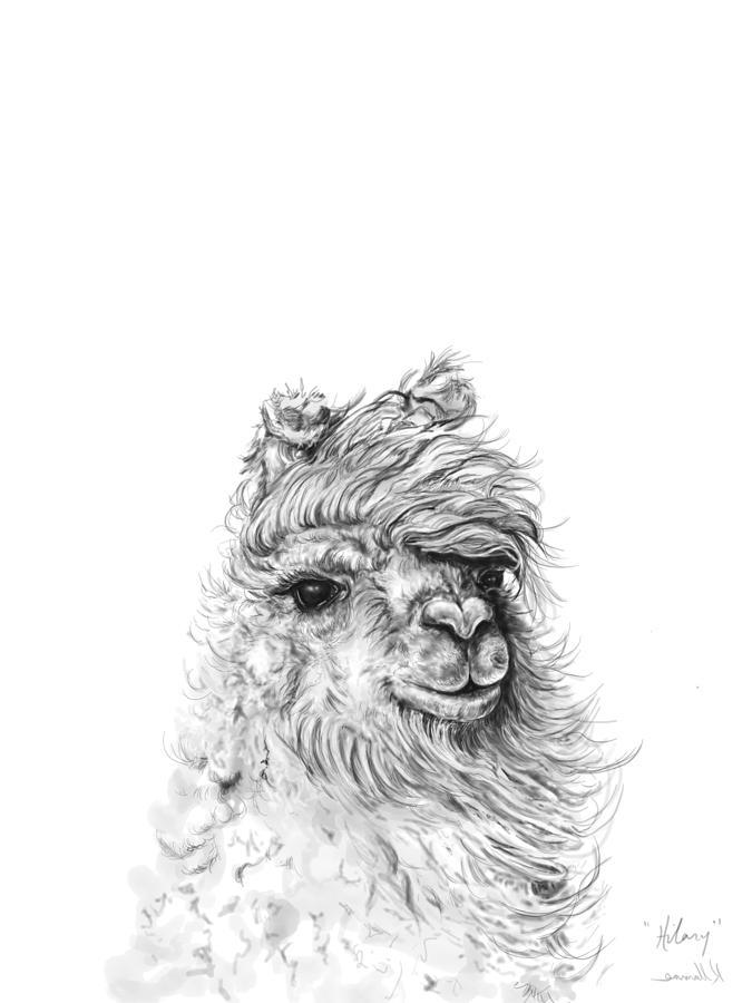 Llamas Drawing - Hilary by K Llamas