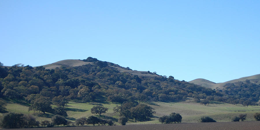 Oak Photograph - Hills Of Oak by Jean Booth