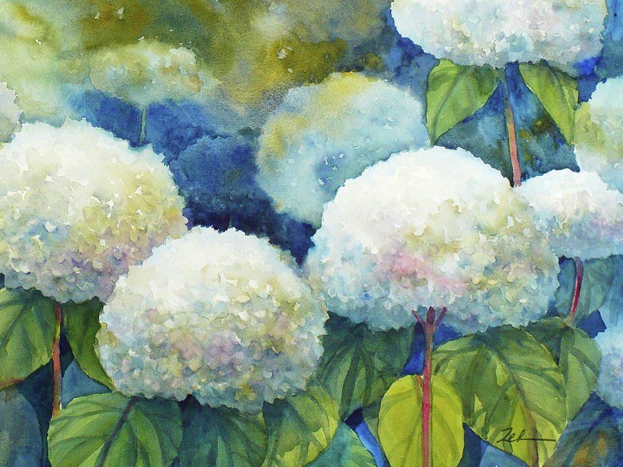 Hills of Snow Hydrangeas 1 by Janet Zeh
