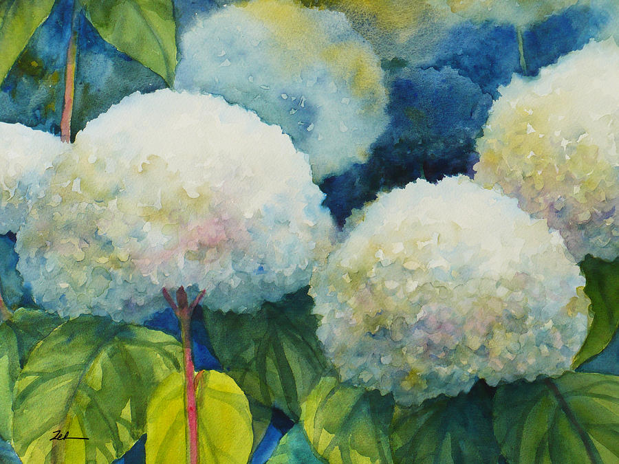 Hills of Snow Hydrangeas 3 by Janet Zeh