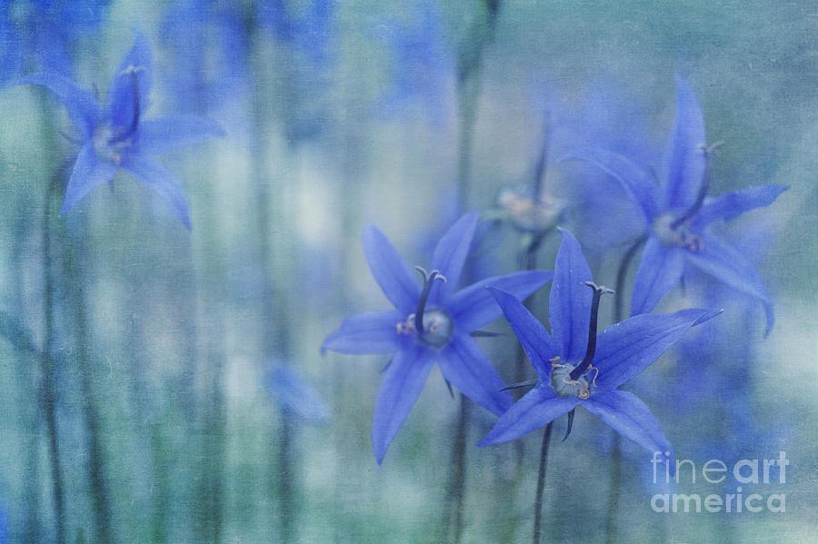 Bellflower Photograph - Hillside Blues by Priska Wettstein