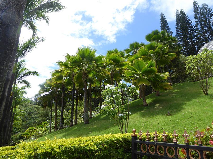 Hawaii Photograph - Hillside Copse by David Givens