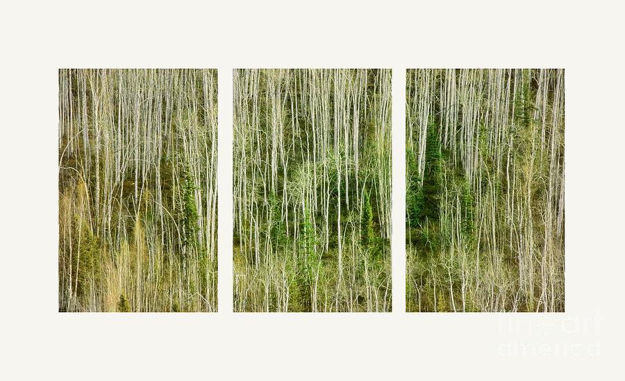 Lines Photograph - Hillside Forest by Priska Wettstein