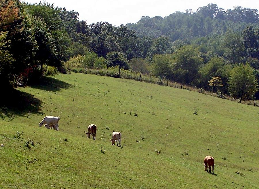 Nature Photograph - Hillside Grazing by Cumberland Studios