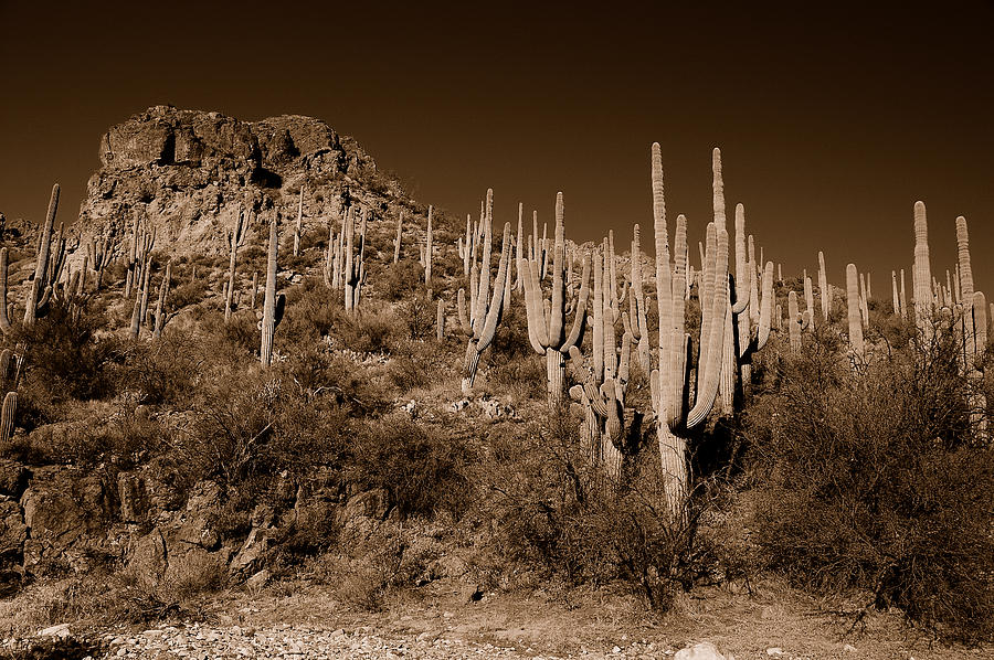 Arizona Photograph - Hillside by John Gee