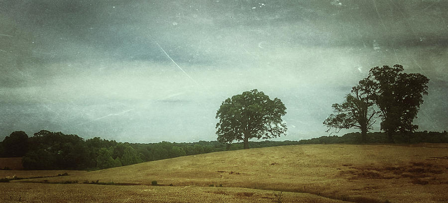 Hillside Tree 2 by E Karl Braun