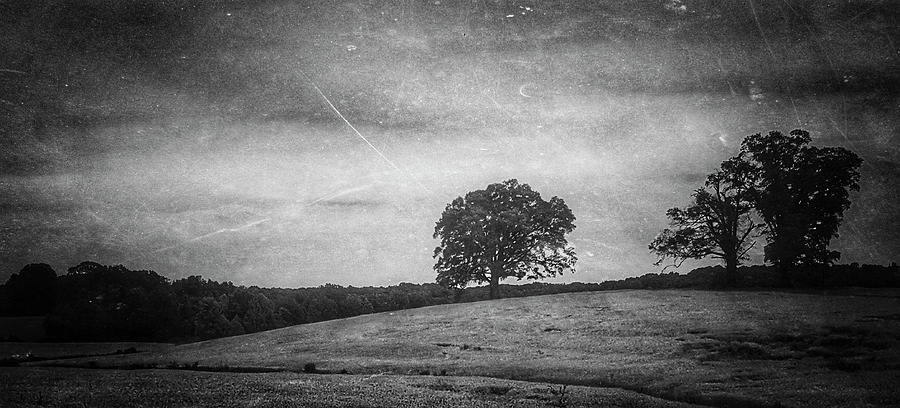 Hillside Tree 5 bw by E Karl Braun