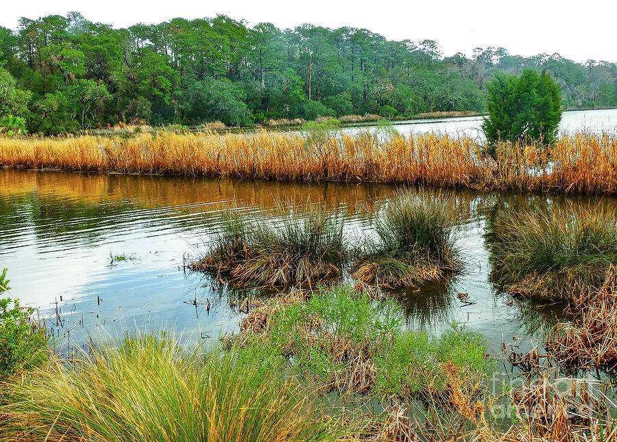 Hilton Head Low Country Marsh Photograph by Norma Brandsberg