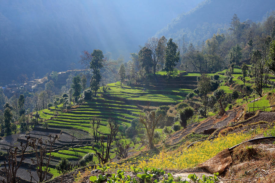 Himalayan Stepped Fields - Nepal Photograph