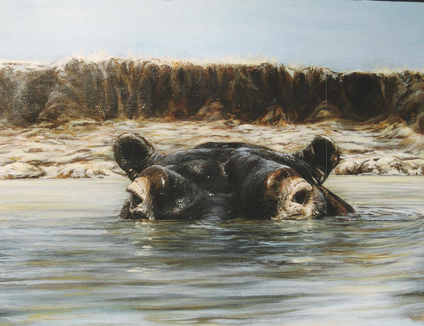 Wildlife Painting - Hippo by Steve Greco