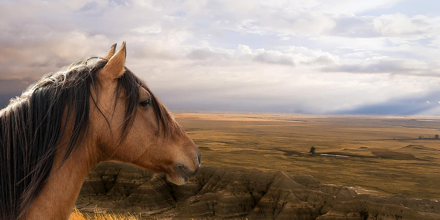 Equine Photograph - His Domain by Ron  McGinnis