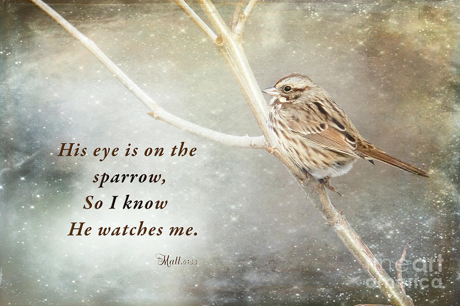 His Eye Is On The Sparrow Photograph